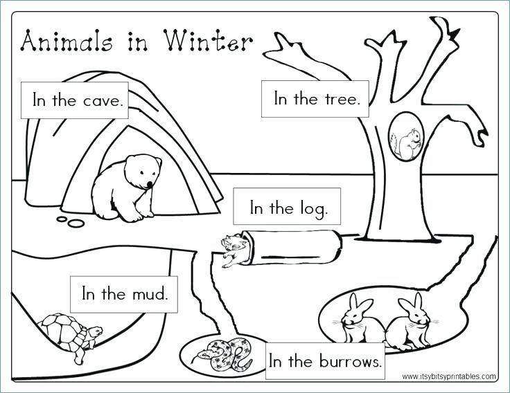 Animals in Winter Printable Worksheetsf | School | Animals that ...