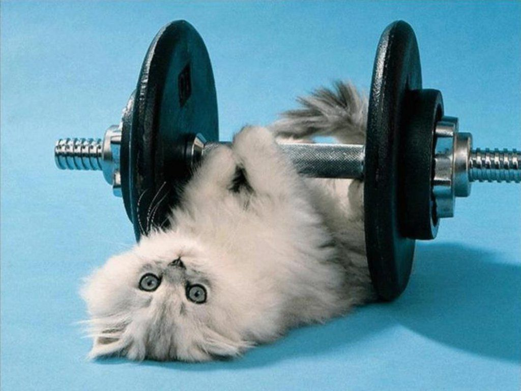 This Feels So Heavy Today Cat Exercise How To Stay Healthy Fitness