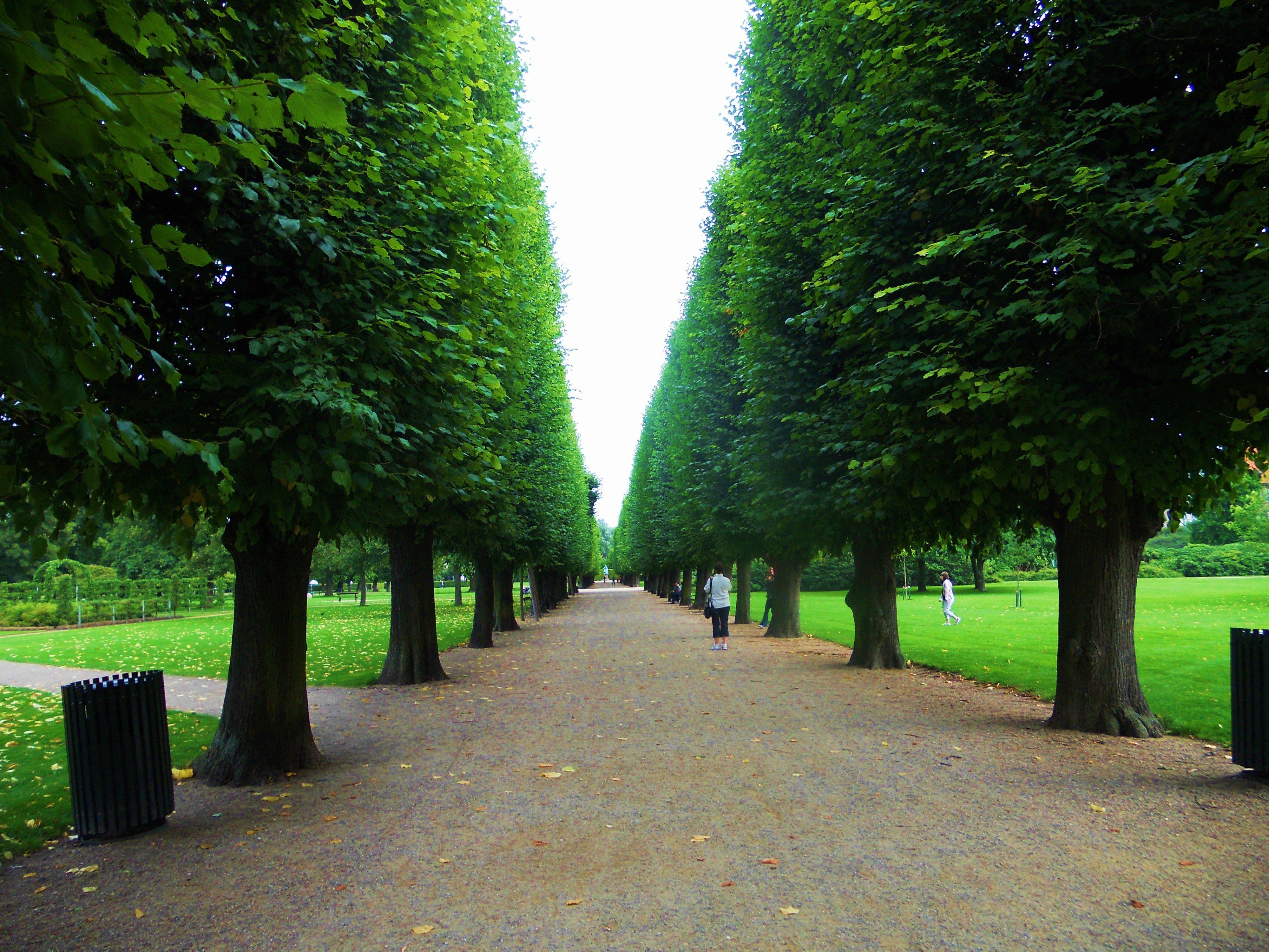 My favorite pathway in the King's Garden