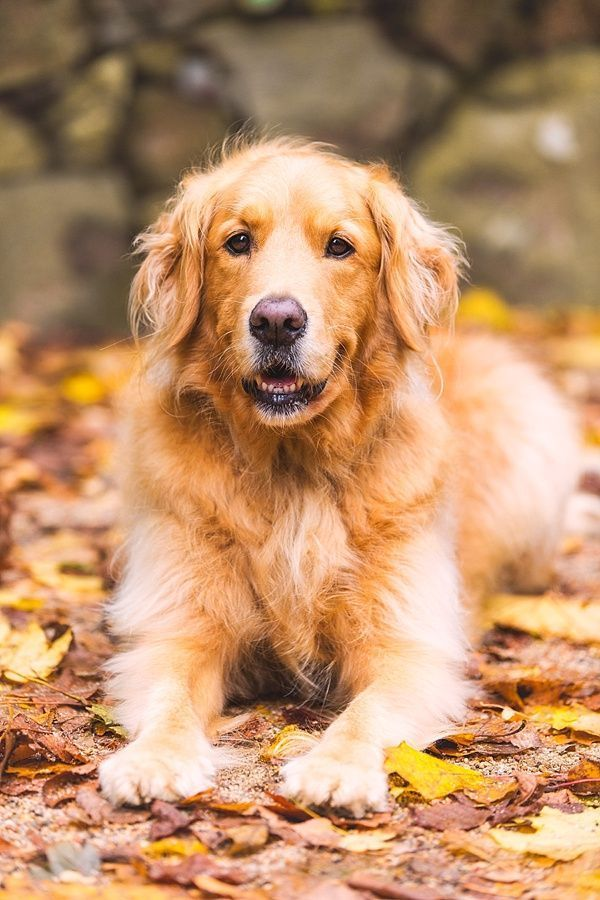 Pictures For Dogs To Look At