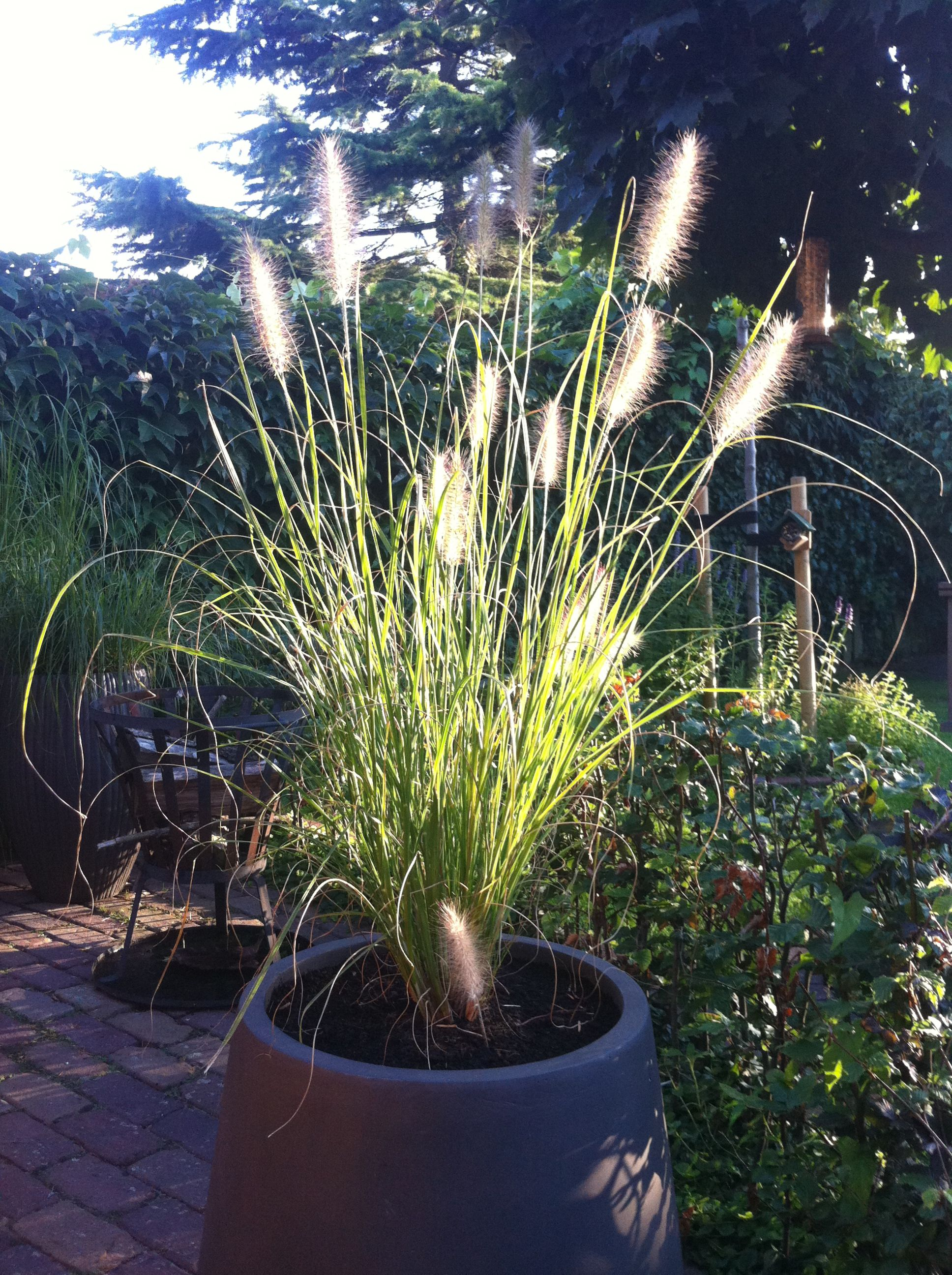 Ornamental Grass Vše co chci vyzkoušet
