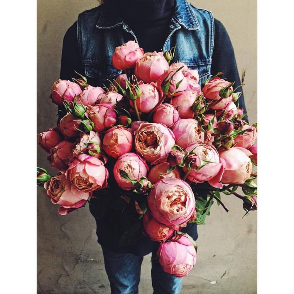 Kwiaty I Miut Red Peonies Love Flowers Planting Flowers