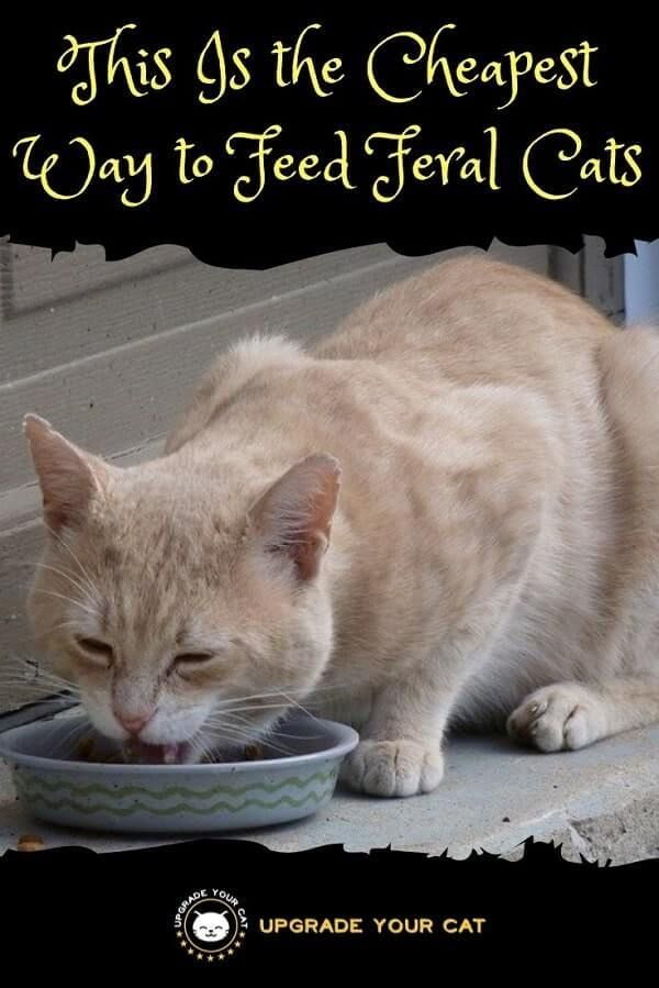 This Is The Cheapest Way To Feed Feral Cats Feral Cats Cats Cheap Cat Food
