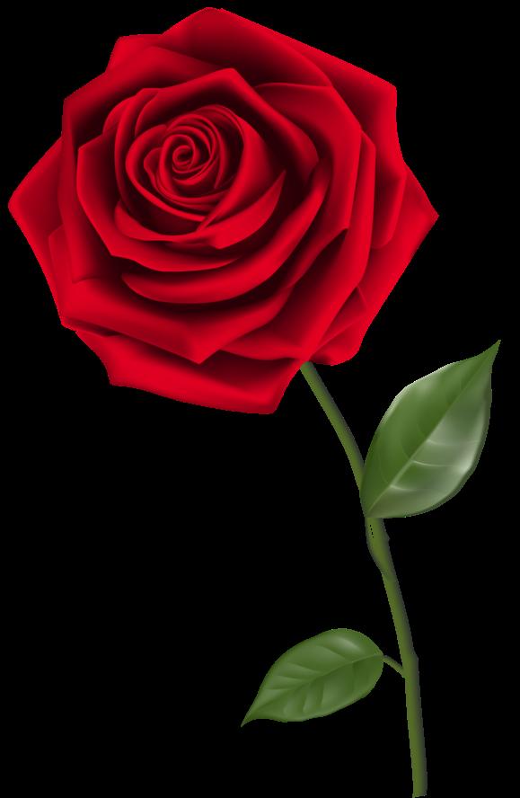 Flores In 2020 Red Rose Png Red Rose Flower Rose Flower Wallpaper