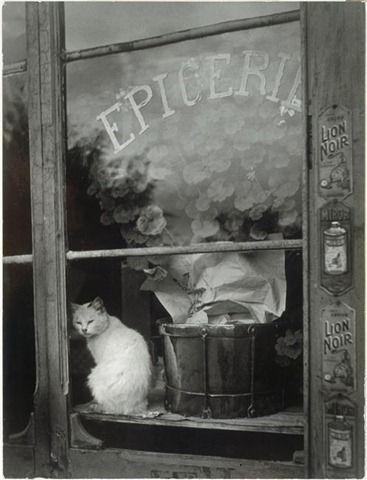 Vintage cat.
