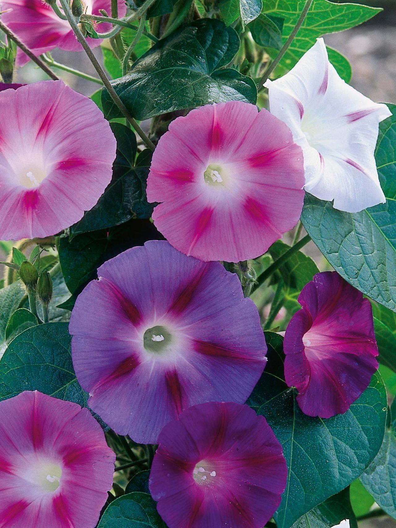 15 Annuals For Cut Flowers Vrt Pinterest Gardens Cut Flowers