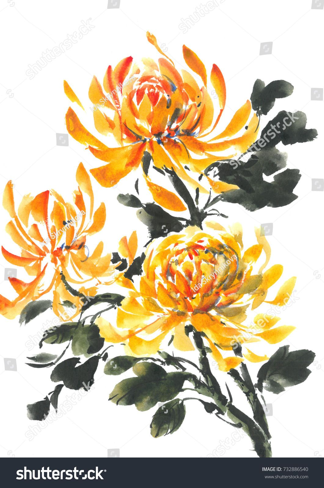 Yellow Chrysanthemum Bright Flowering Chrysanthemum Watercolor Background Chrysanthemum Watercolor Chrysanthemum Painting Yellow Flowers Painting