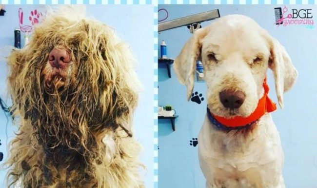 Groomer Opens Shop At Midnight To Care For Severely Matted Stray Pet Groomers Losing A Pet Dog Groomers
