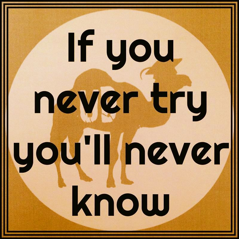 If you never try you0ll never know   #UniDesert #UniDesert2015 #Only4students www.facebook.com/unidesert www.unidesert.com http://instagram.com/unidesert