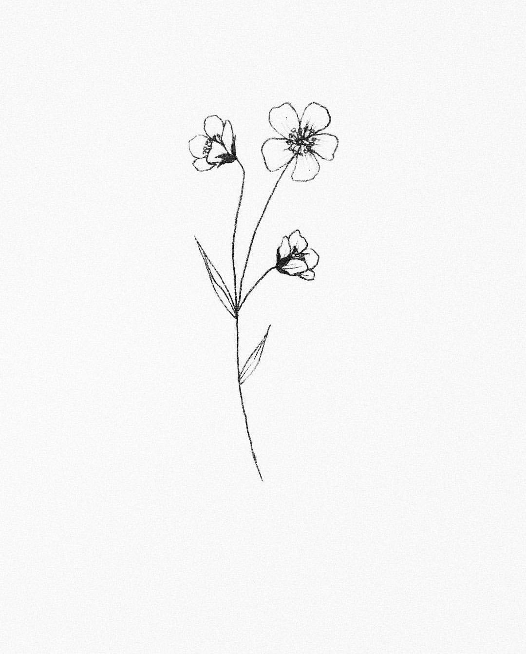 Pin By M C On Tats Small Flower Drawings Small Flower Tattoos Plant Sketches