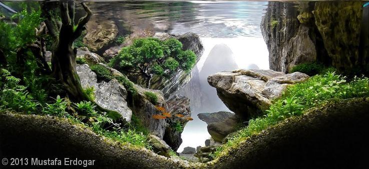 'The Crag' aquascape by Mustafa Erdogar 2013 AGA Aquascaping Contest - Entry #279