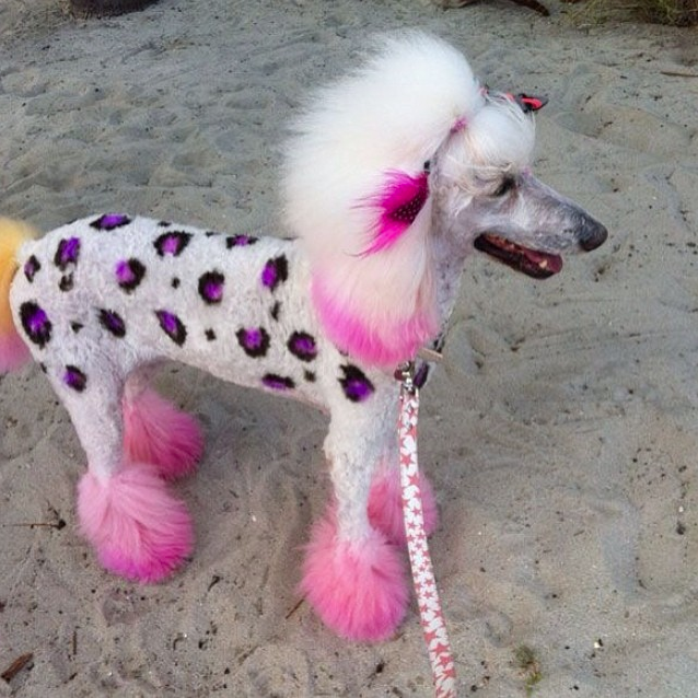 If I had a poodle.... Creative grooming, Dog grooming