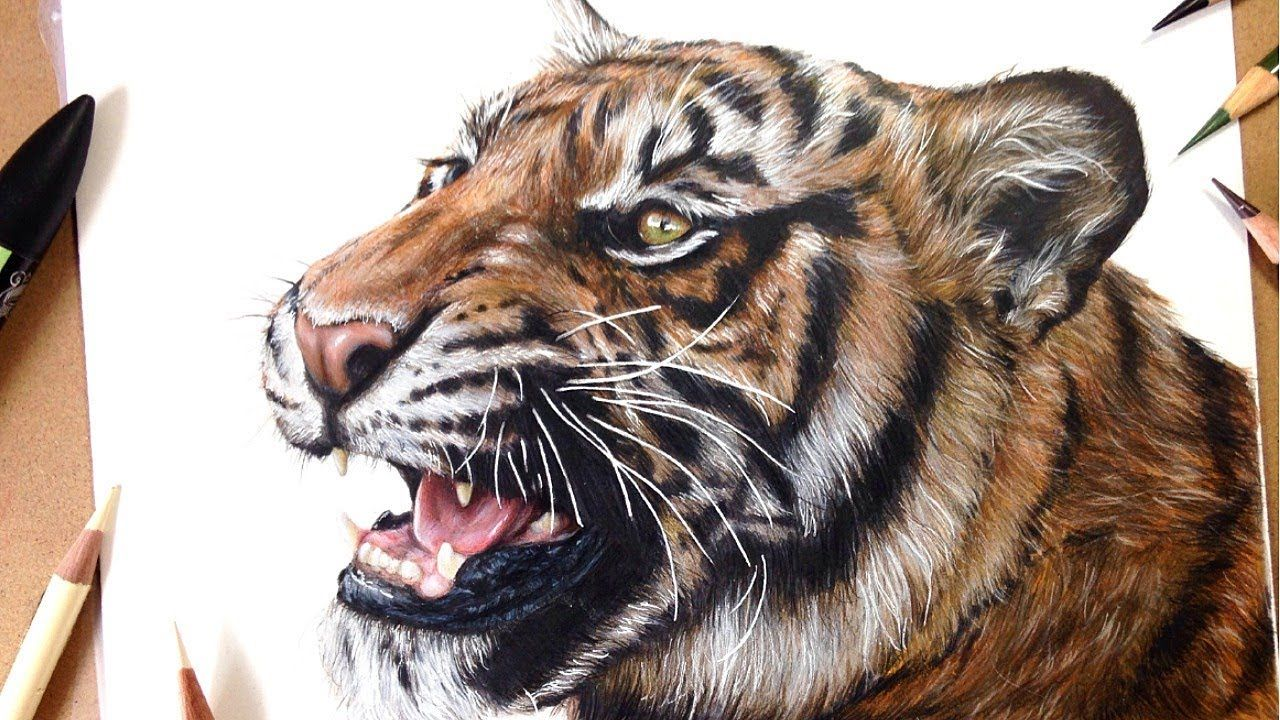 How To Draw A Realistic Tiger Marker Coloured Pencil Drawing