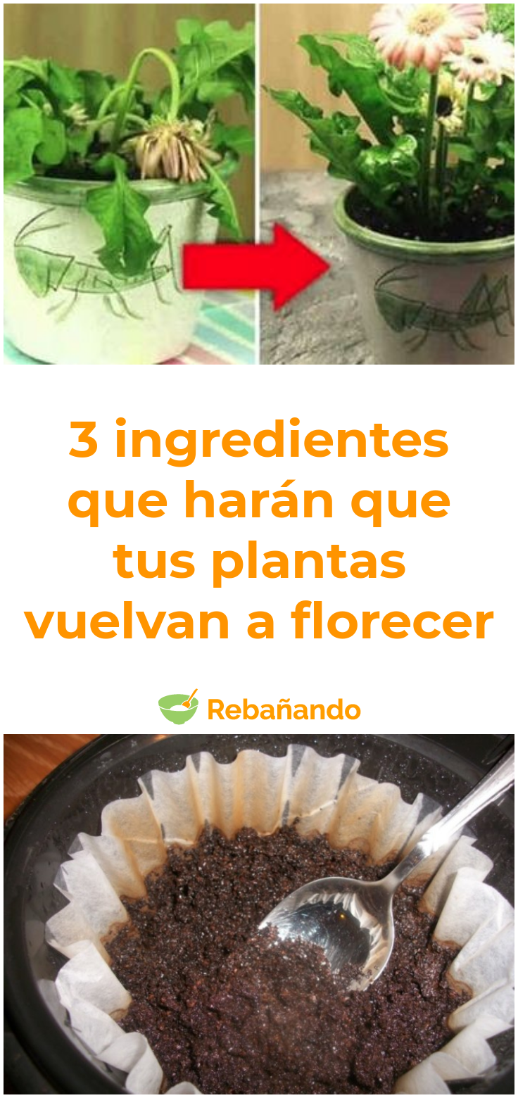 ¡Estos 3 ingredientes harán que tus plantas sin vida florezcan y crezcan como locas!