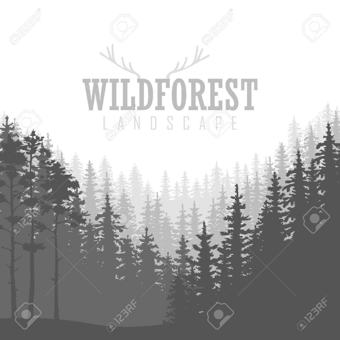 Fondo Del Bosque De Coníferas Salvaje Pino Paisaje De La