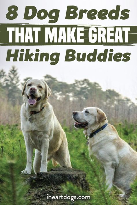 8 Dog Breeds That Make Great Hiking Buddies Dogs Dog Breeds
