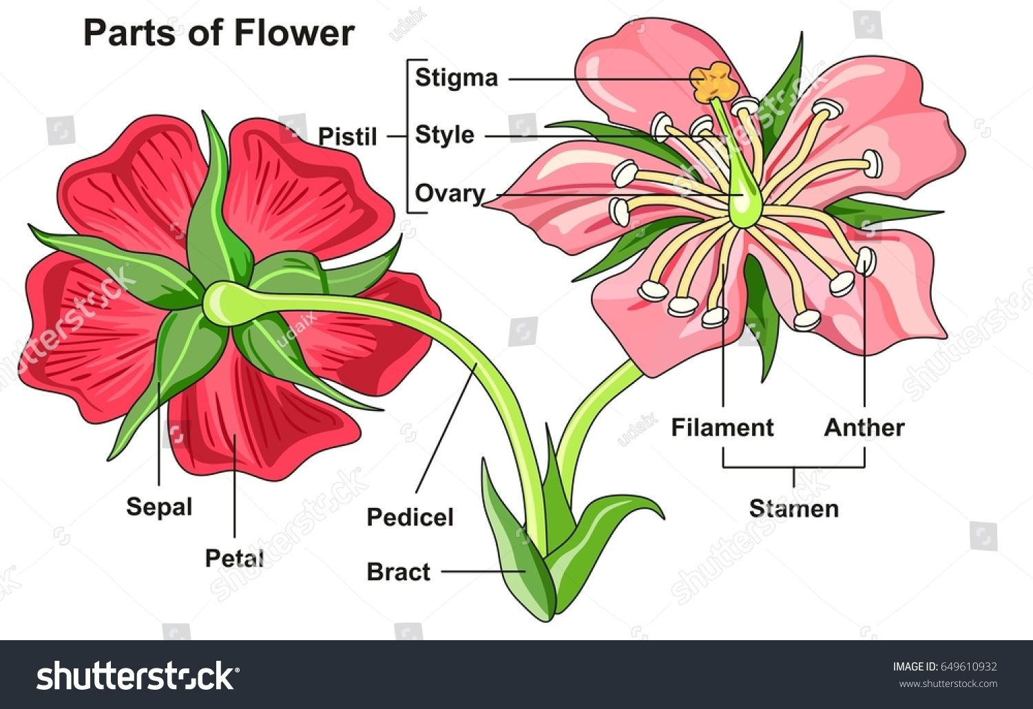 Flower Parts Diagram front and back view with all parts