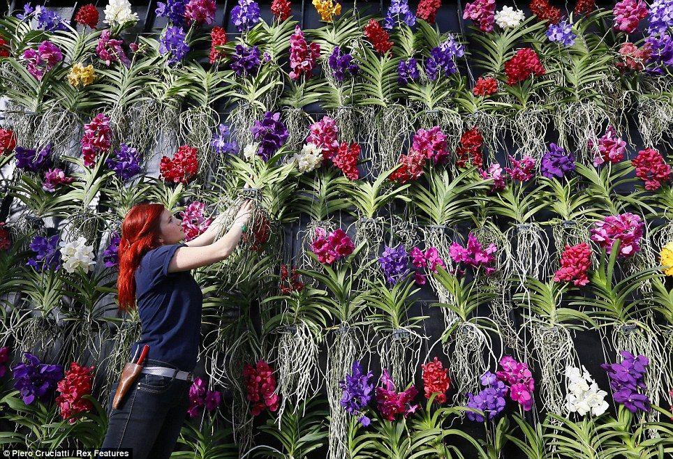 Resultado de imagem para Jardim Botânico de Kew orchids