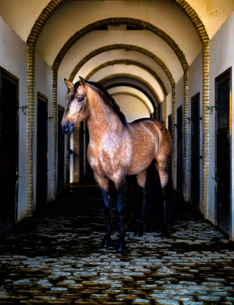 Pin Von Anna Vincze Auf Tiere Hubsche Pferde Pferde Pferdefotos