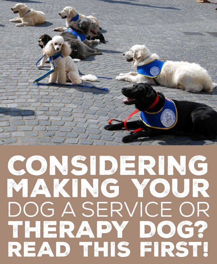 Considering Making Your Dog A Service Or Therapy Dog Read This