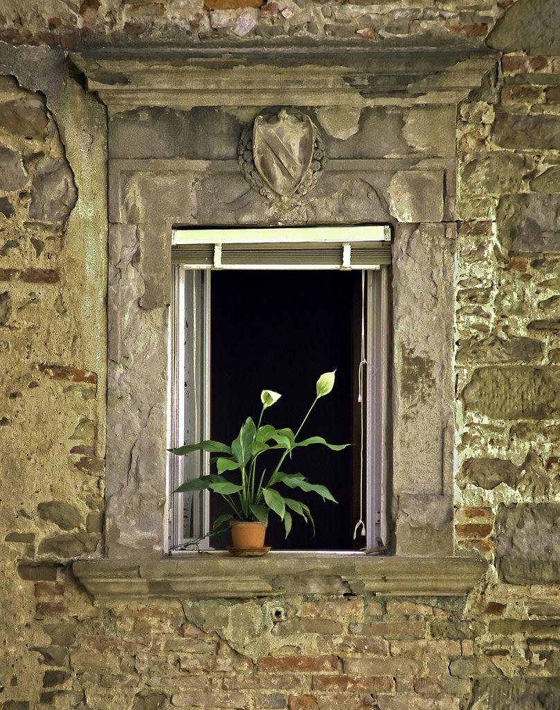 Flowers in Window, Orvieto, Italy   por mjphoto-graphics