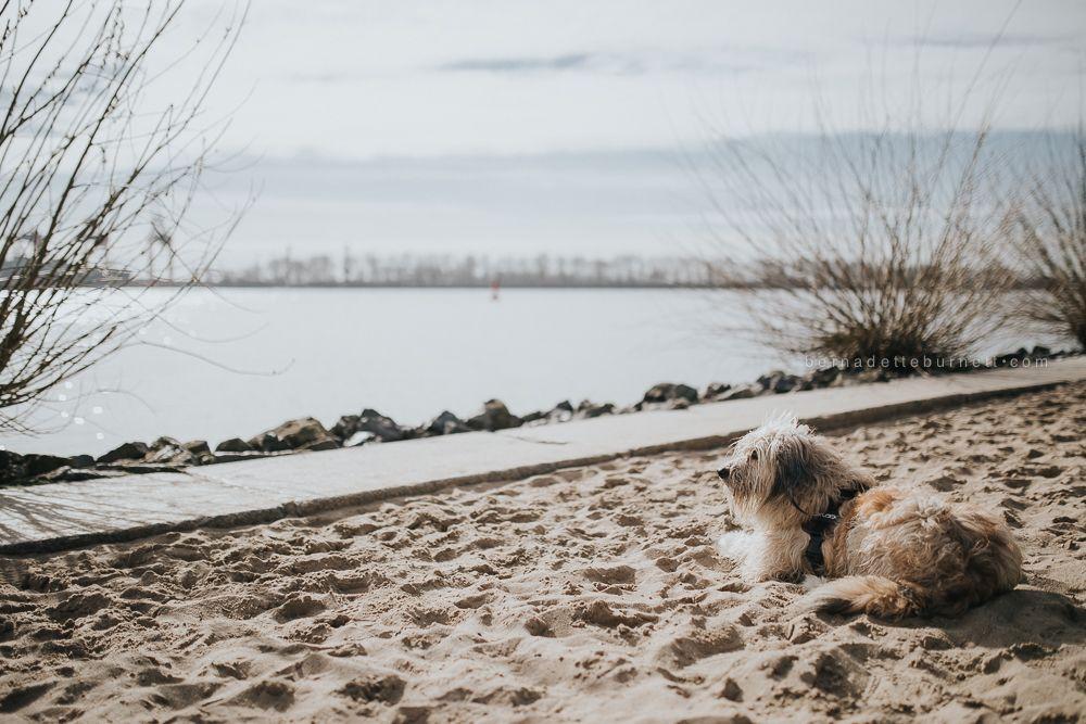 Hund am Strand   dog on the beach   Elbstrand, Hamburg   dog photography   lifestyle photography