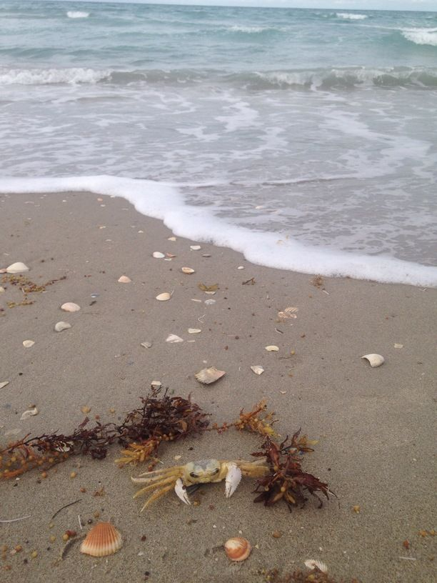 Normandy Beach Jensen Fl