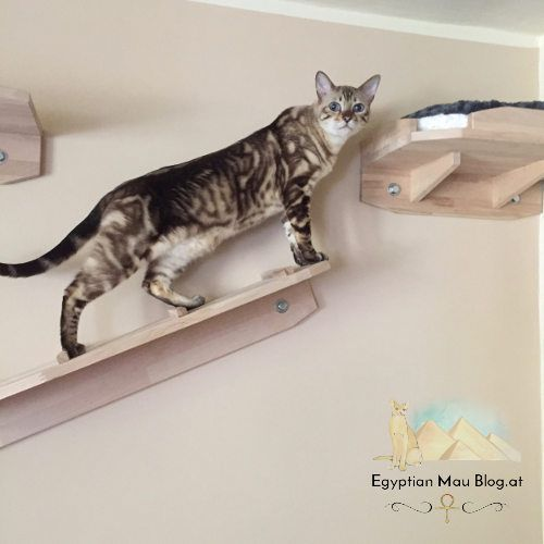 kletterwand f r katzen katzenwand cat wall climbing wall for cats lion king k nig der. Black Bedroom Furniture Sets. Home Design Ideas