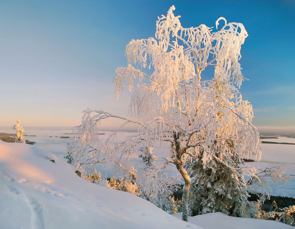Winter Wonderland Images Of Stunning Snowy Landscapes Landscape Winter Scenes Snow Images
