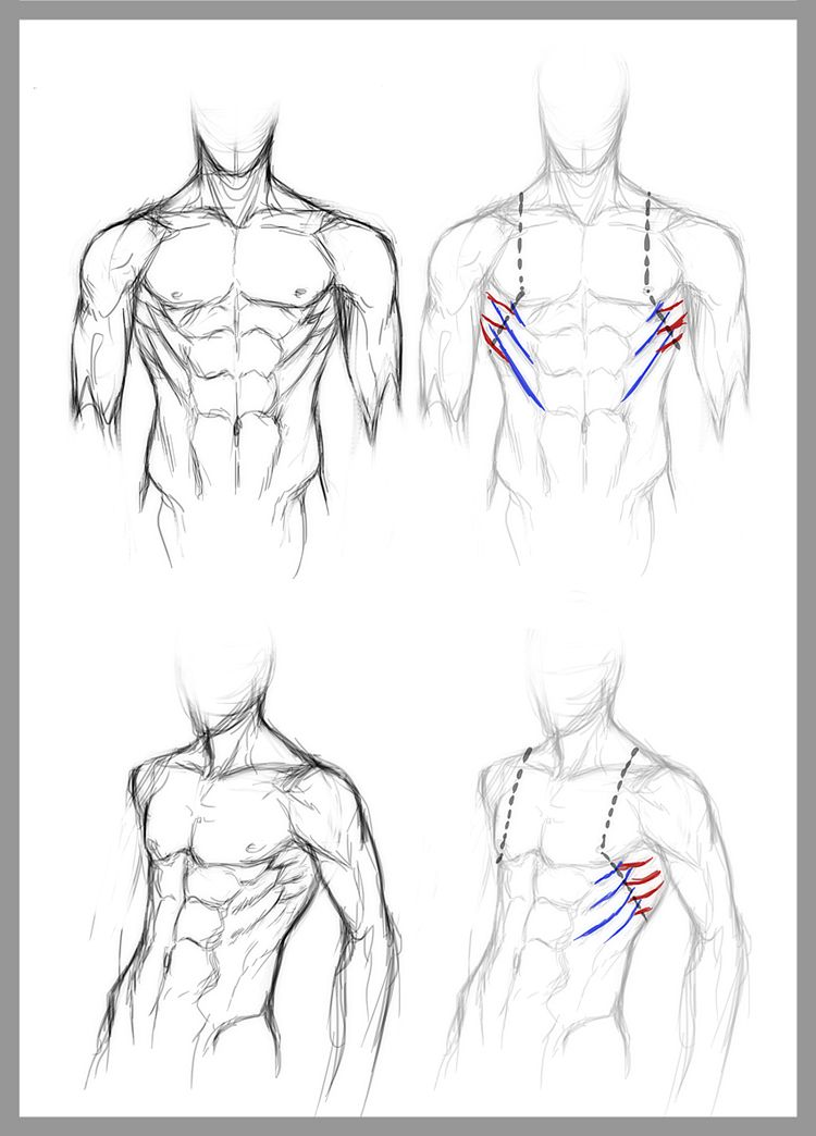 DeviantARTist jinx-star\'s guide to drawing the serratus anterior ...