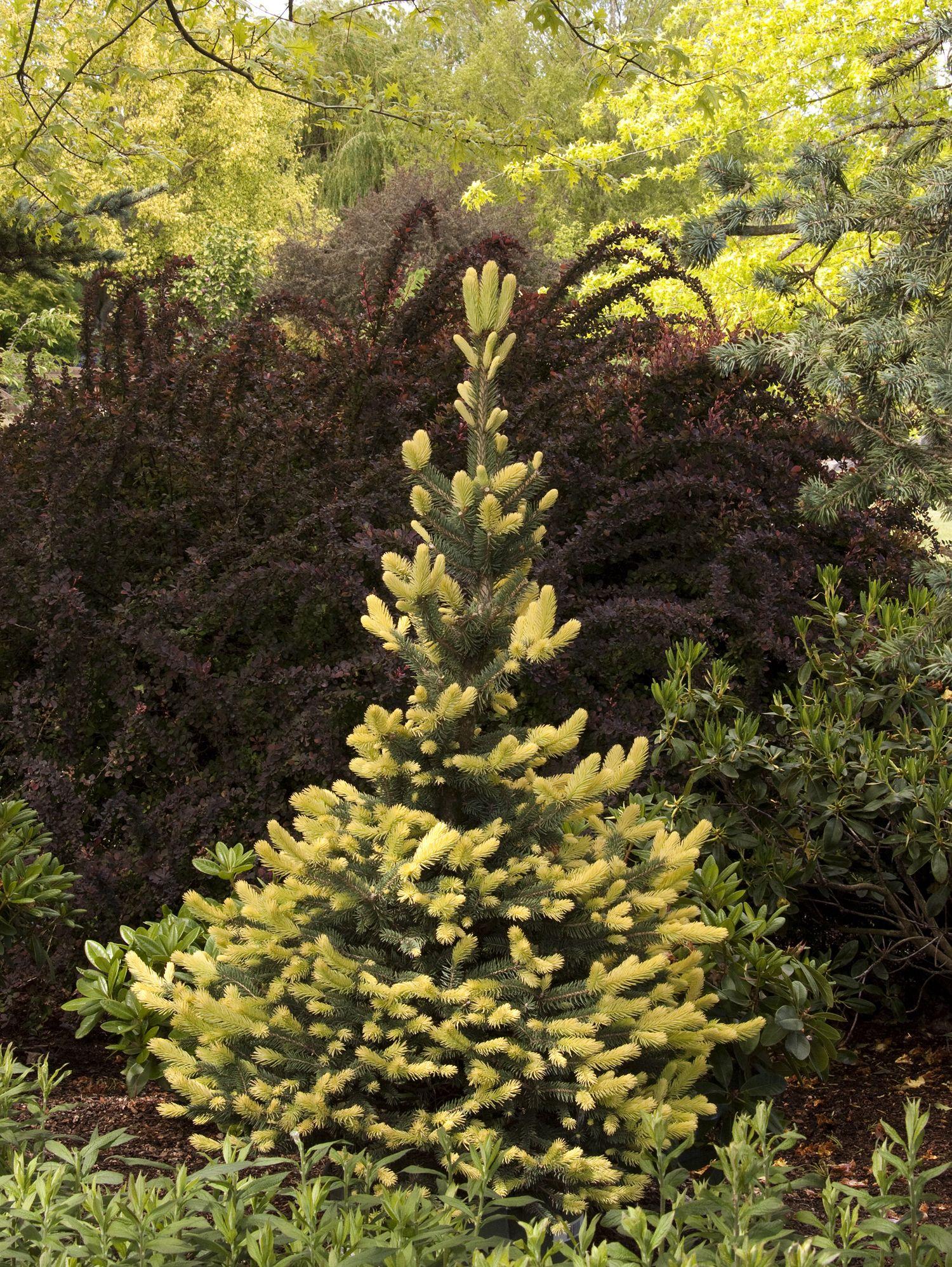 Exelent Garden Zones Vignette - Brown Nature Garden ...