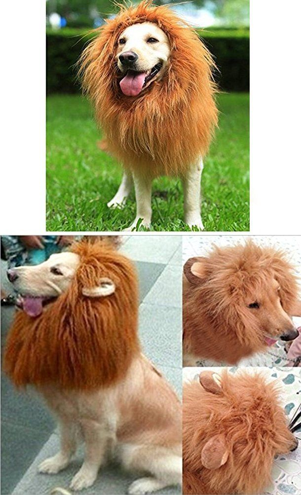 Looching 1Brown (no ears) 1 Red Brown(with ears) Lion Mane