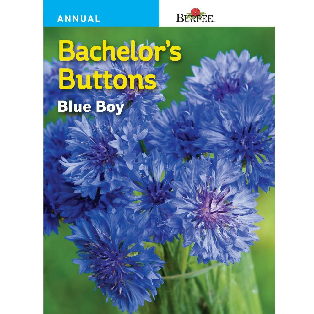 Burpee Bachelor'S Buttons Blue Boy Flower Seed40742 The