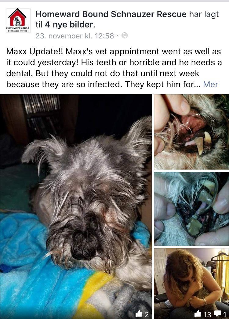 11/23/16 MAXX UPDATE!! /ij🐾🐾  https://m.facebook.com/story.php?story_fbid=1171076049646002&id=919320991488177&__tn__=%2As