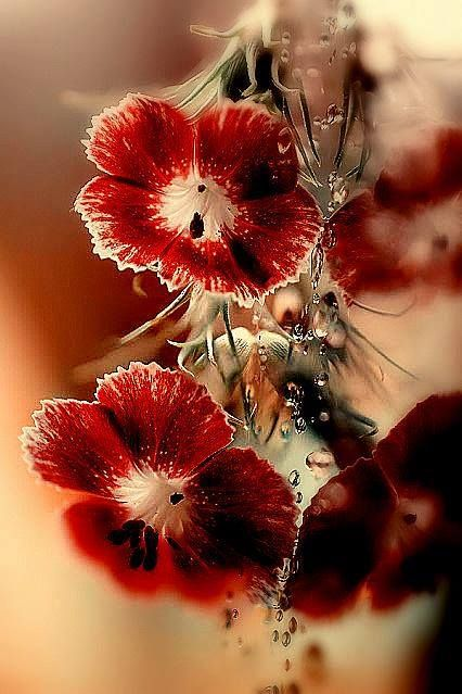 pin von brigitte turcotte auf flower pinterest blumen. Black Bedroom Furniture Sets. Home Design Ideas