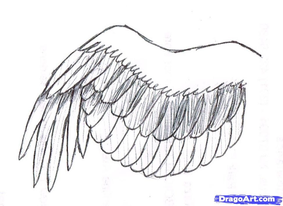 How To Draw A Simple Bird Wing By Phoenixcelestius With Images