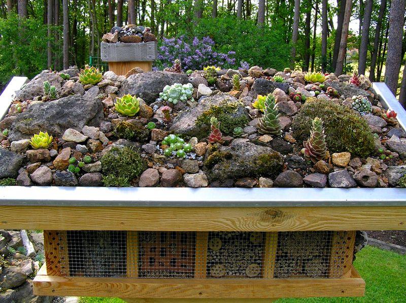 sempervivum und sedum auf dem wildbienenhaus garten pinterest insektenhotel dachwurz und. Black Bedroom Furniture Sets. Home Design Ideas