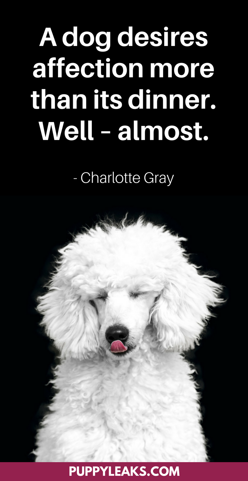 30 Cute Funny Dog Quotes Puppy Leaks Dog Names Poodle Dog Girl Dog Names