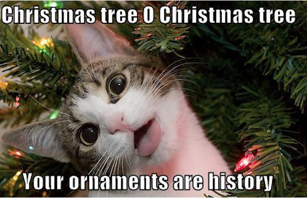 Are You Looking For Funny Merry Christmas Memes This Year Super Charge The Holiday Wi Funny Merry Christmas Memes Christmas Memes Funny Merry Christmas Funny