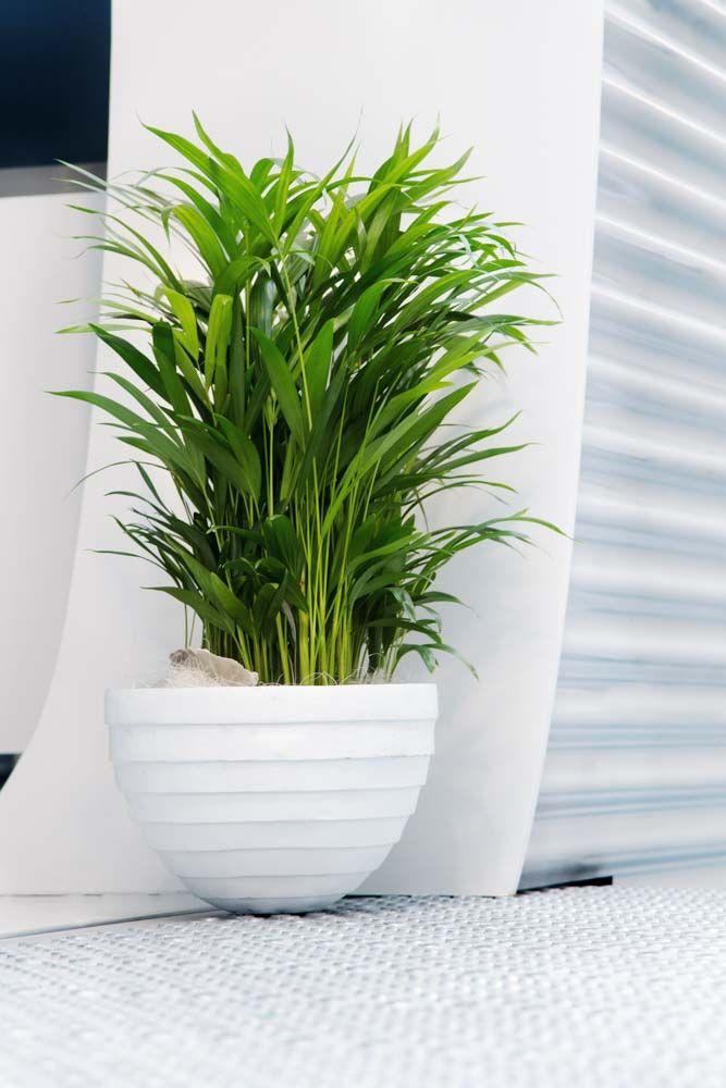 Grün dekoriert: Wirkungsvolle Pflanzen für die Wohnung – Lebe Lieber Fesch