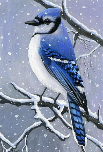 Blue Jay Bird Winter Snow Tree Branches Limited Edition Aceo Print Art Miniature