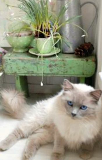 cottage kitty
