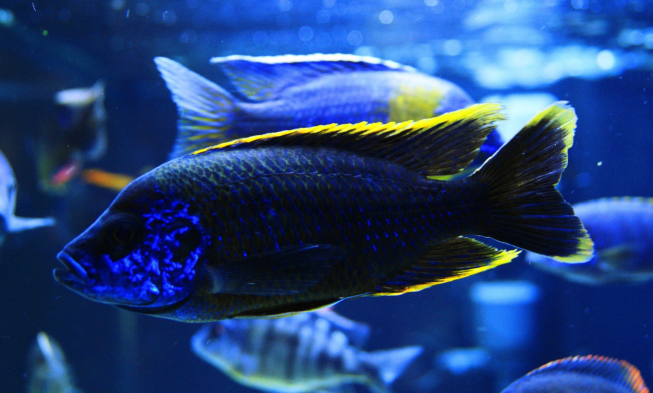 1d0d429787fd6b3505538349321a6cbf Frais De Aquarium Tropical Schème