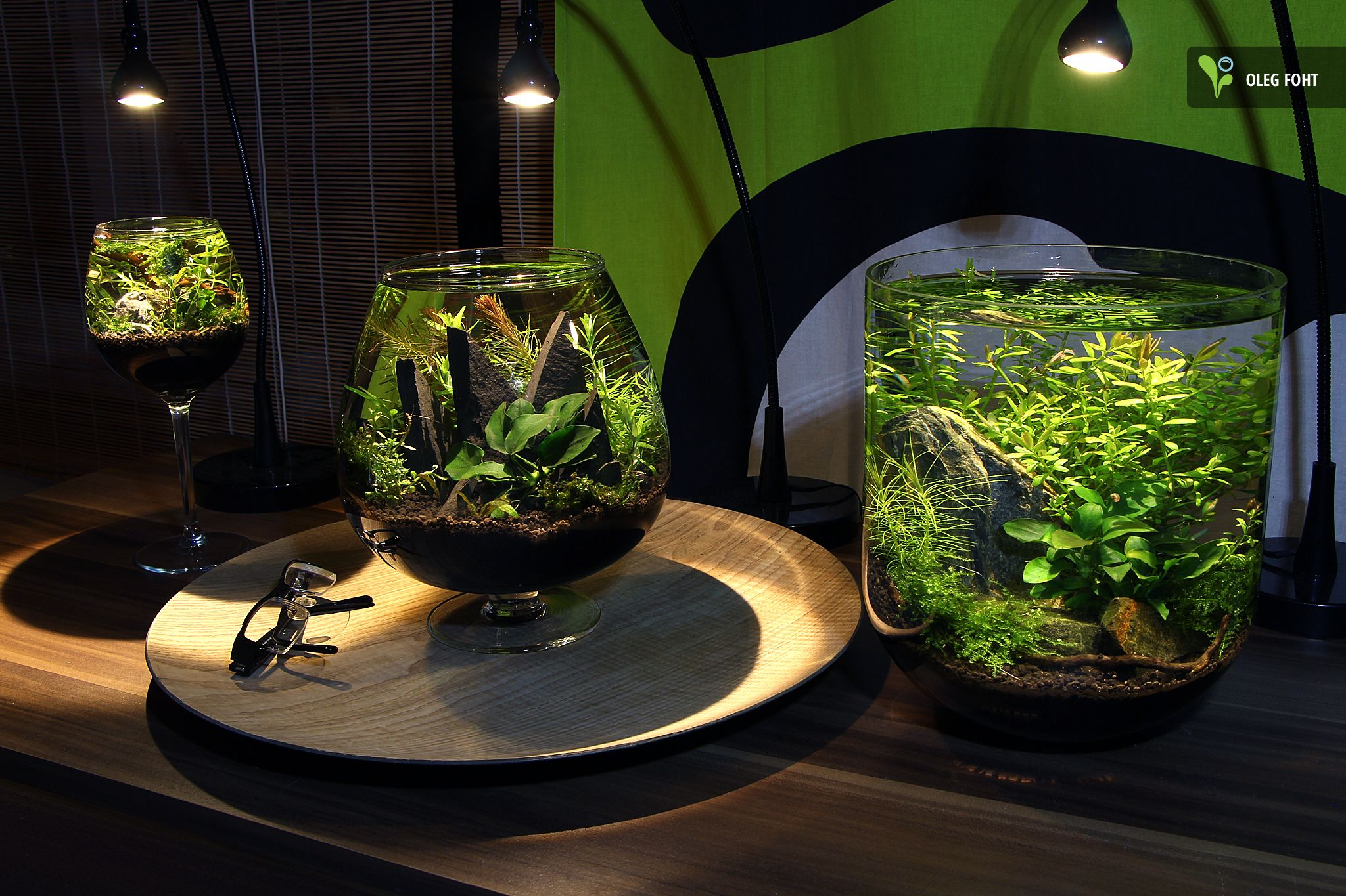 group of tiny aquariums aquarien fische pinterest aquarium aquarien und aquarium terrarium. Black Bedroom Furniture Sets. Home Design Ideas