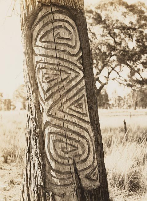Carved trees wiradjuri country album bora ground at