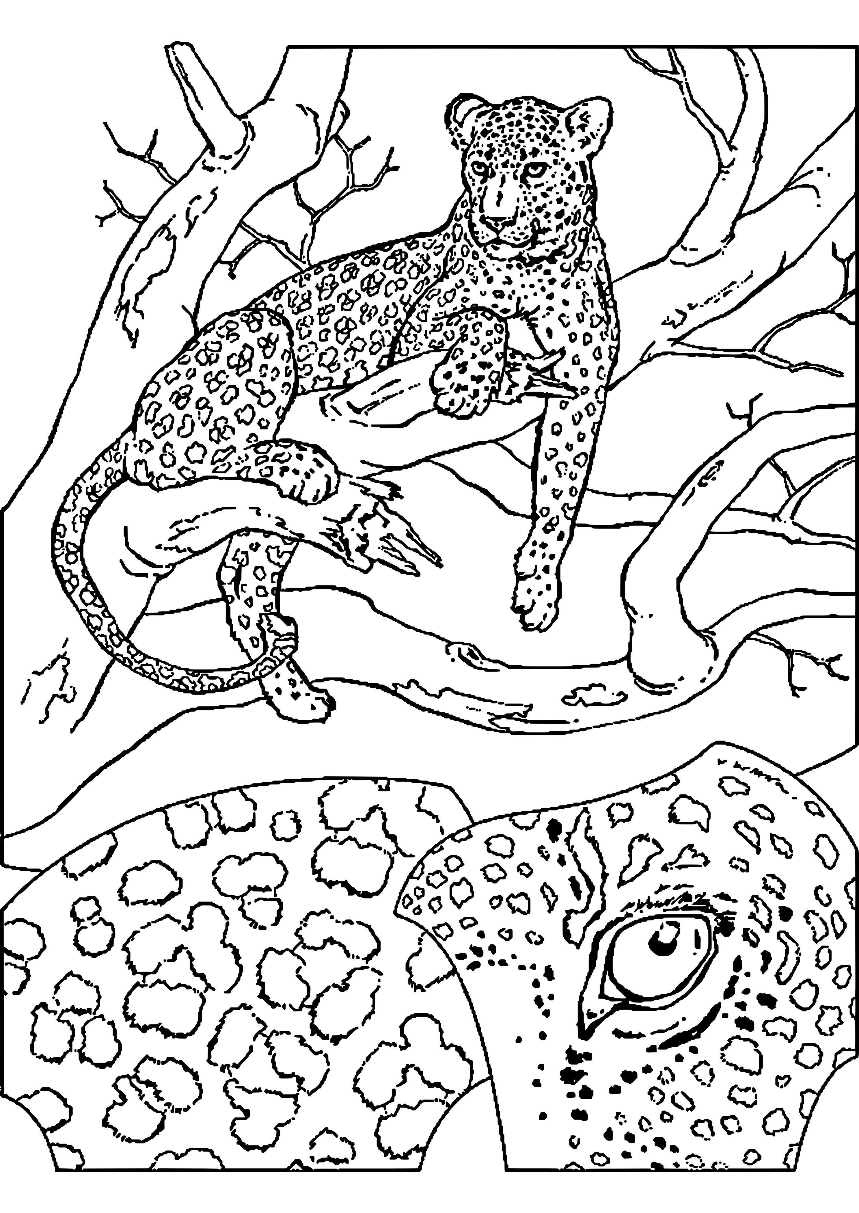 einzigartig ausmalbilder tiere gepard  giraffe coloring