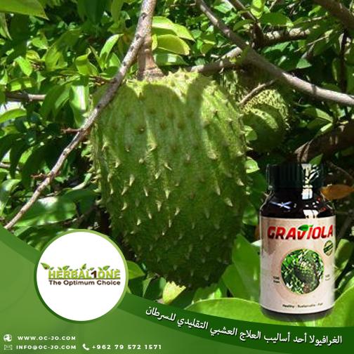 الغرافيولا أحد أساليب العلاج العشبي التقليدي للسرطان السعودية العراق ليبيا اليمن أمريكا حول العالم