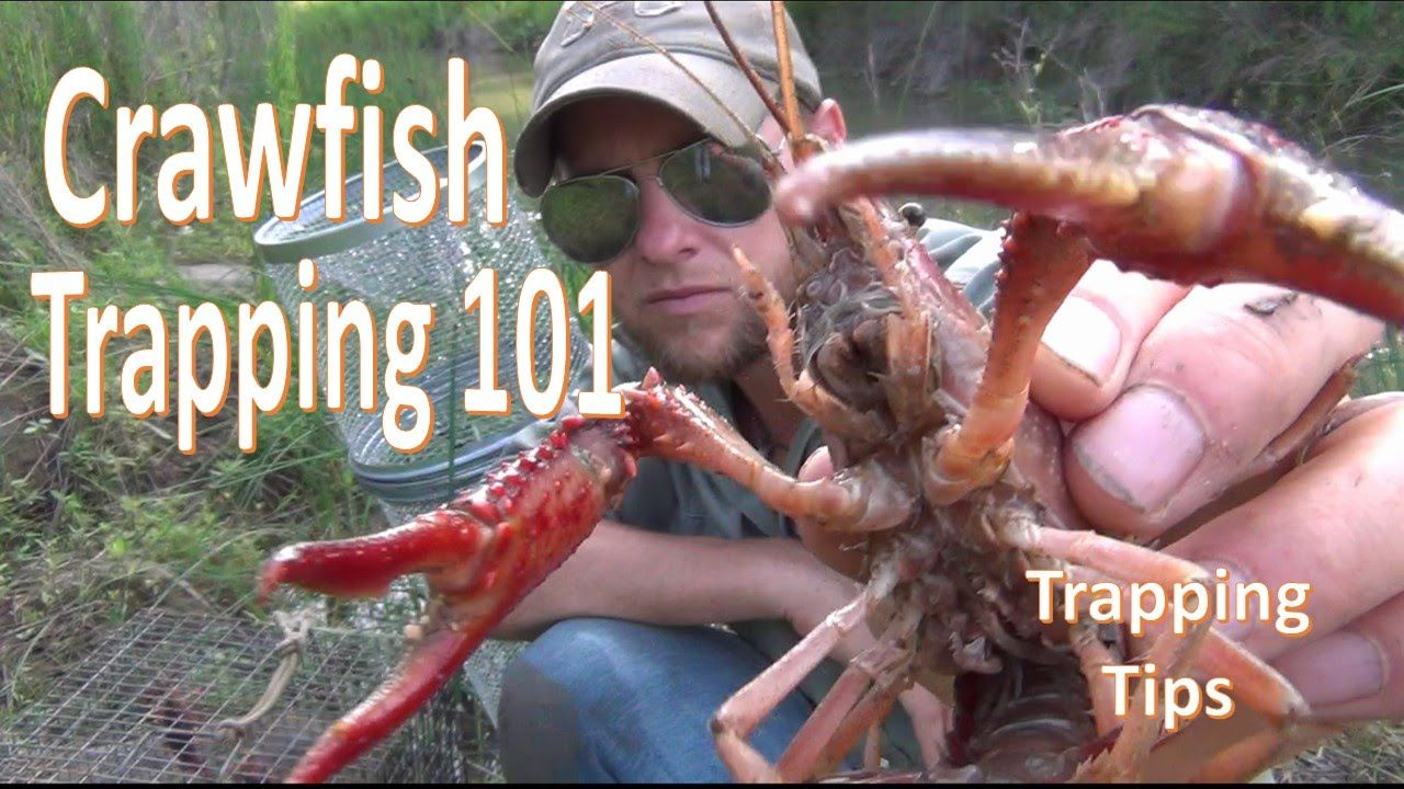 How To Catch Crawfish 101 W Gee S Trap Extender Crawfish Crawfish Traps Crayfish