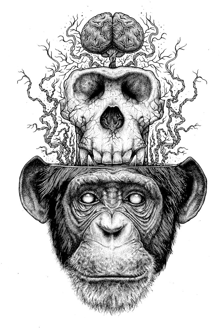 Illustration Tattoos: Ape Skull & Brain By Paul Jackson