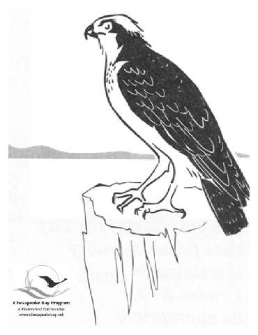 Osprey Coloring Pages With Images Coloring Pages Sketches Art